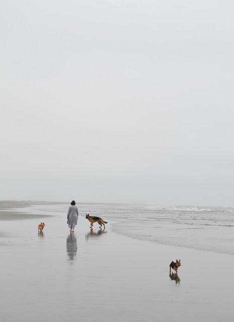 beach, ocean, lifestyle, washington, travel, corgi, dogs