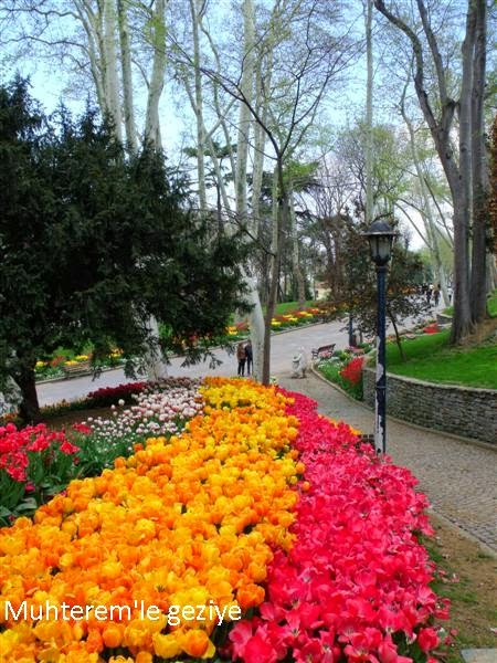 tulip time in Istanbul