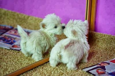 http://galazioneiro.blogspot.gr/, Αρωματοθεραπεία για τους φίλους μας τα ζώα