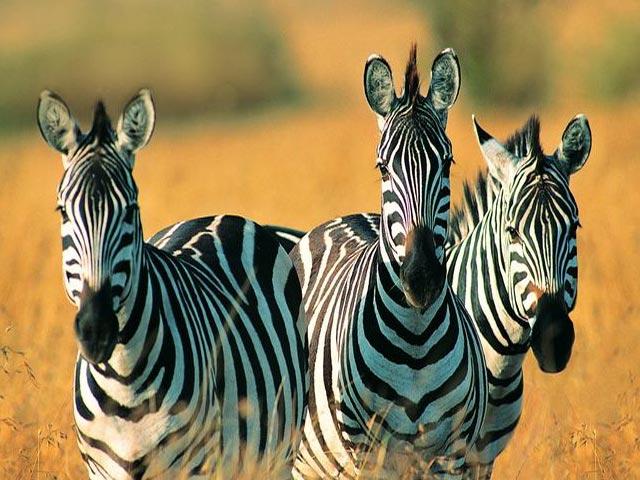 Herbivorous Animals Pictures