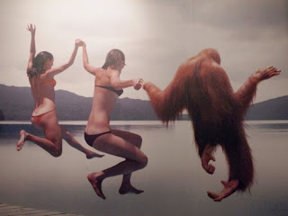 wtf girls gorilla diving, wtf girls diving, wtf diving gorilla, gorilla, gorilla diving, wtf gorilla