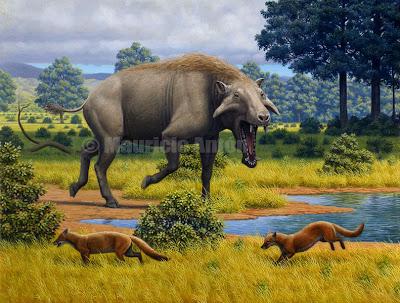 jabali gigante Archaeotherium