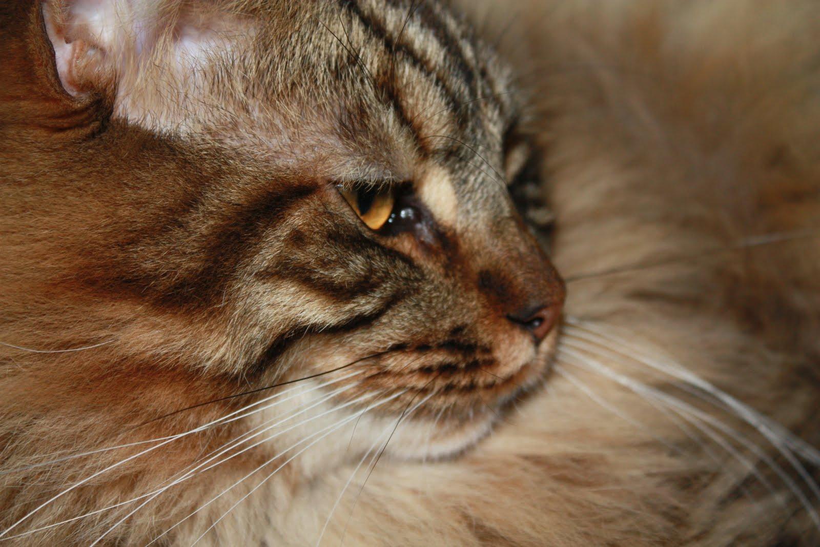 Cat essay writer