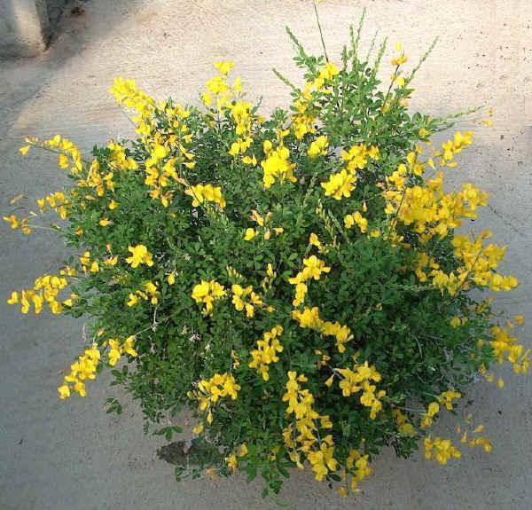 LHORT DE PQPI: Plantas aromáticas. Manuel Rodríguez