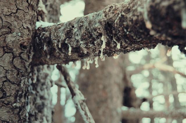 montagne-savoie-revard-ski-neige-ciel-beau-temps-photo-balcon-bois-chalet