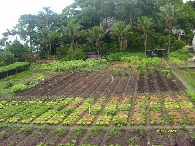 Horta Orgânica em Mendes