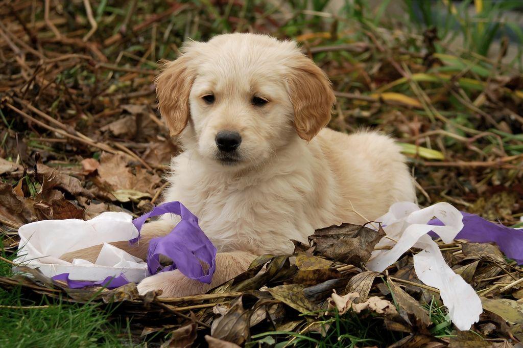 32. Mischievous Puppy by Dee