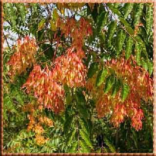 ağaç evler    güzel yarar fayda zarar çin Çin Japon Doğu Batı ağaç ev     orman     rüyada ağaç görmek     ağaç resimleri     ağaç kesme     ağaç resmi     ağaç adam     ağaç türleri     ağaç motoru