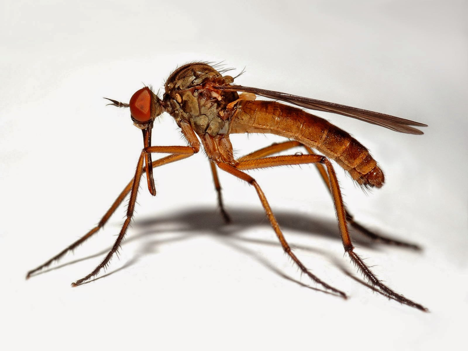 Deri Böceği Nasıl Yok Edilir