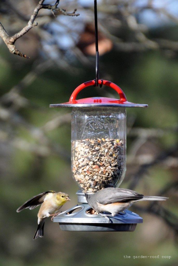 The garden roof coop diy chick feeder bird feeders for Old chicken feeder ideas