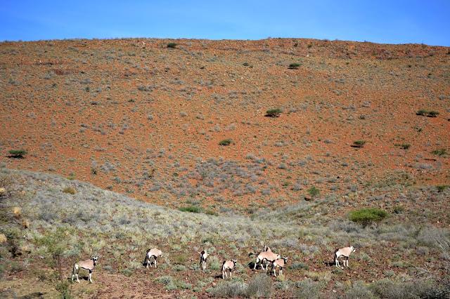 Gemsbok (Oryx) in the Naukluft Mountain Zebra Park