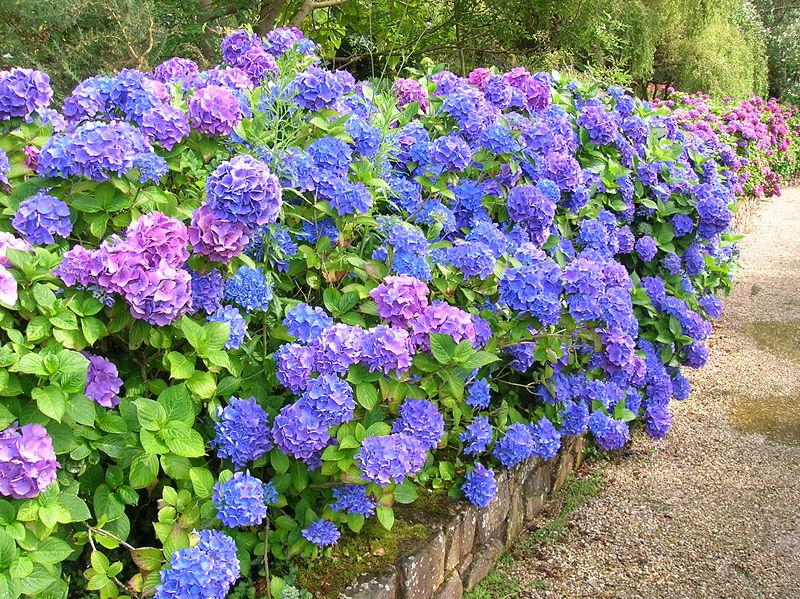 plantas toxicas jardim:Coelhomania – Mini Coelhos: Plantas Tóxicas Para Coelhos – Parte I