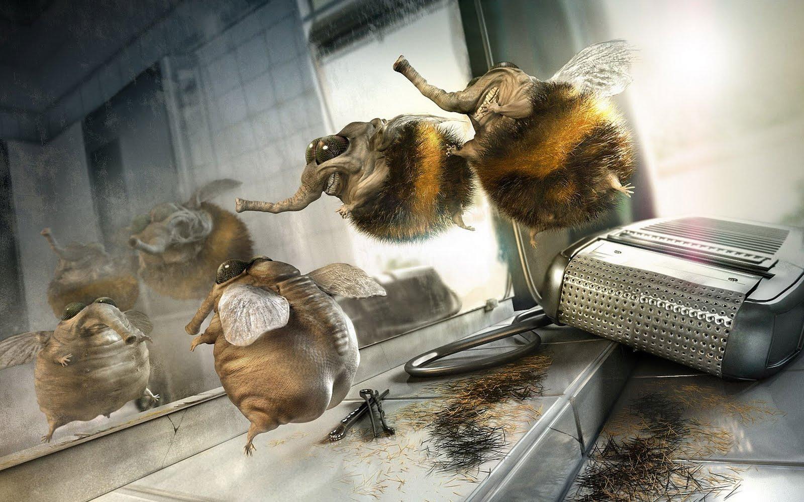 http://1.bp.blogspot.com/-m-w5hRT8_VY/TcG4IV__KII/AAAAAAAAAEk/fao3LsmPy74/s1600/funny-wallpaper-bees.jpg