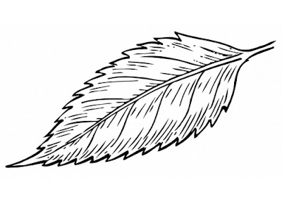 Line Drawing :: Clip Art :: Leaf