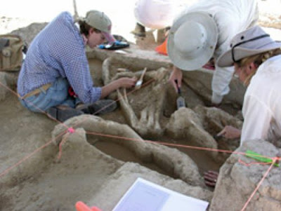 Search for link between mammoth bones and early hunters