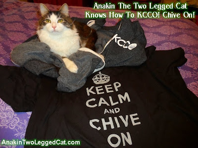Anakin The Two Legged Cat, KCCO Chive On! theChive