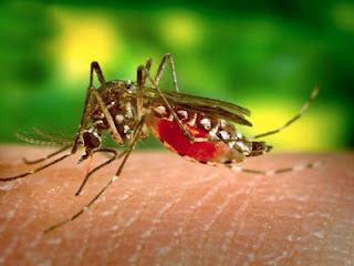 Nanda Nursing Diagnosis for Dengue Fever