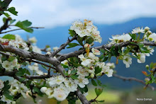 Primavera: l'inici de vida