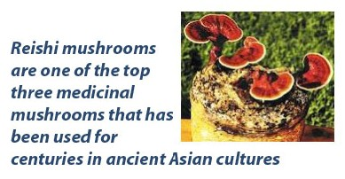 Reishi mushrooms benefits
