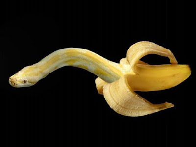 snake banana fruit carving pictures