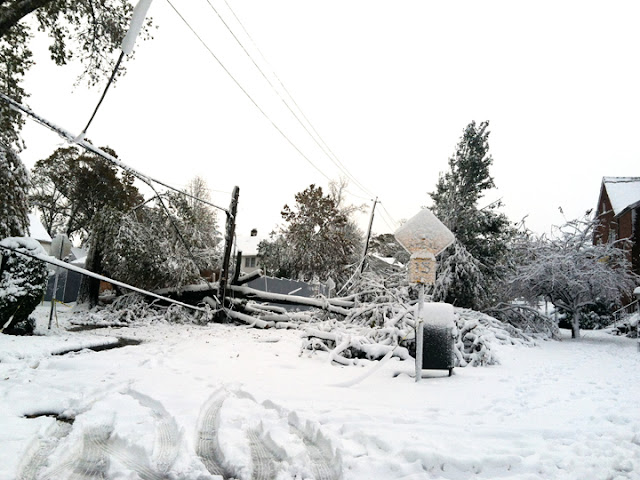 snow covered downed power lines and trees from Hurricane Sandy and Nor'easter Athena
