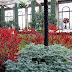 Figs flowers food babylonstoren part iii teekamer in - Places to eat near longwood gardens ...