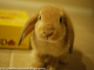 Cute rabbit.