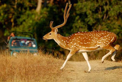 Amazing wildlife Of Pench