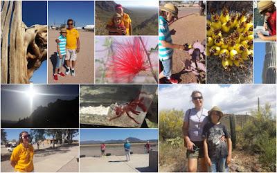 Tucson, AZ May trip: Desert Museum, Old Tucson, Airplane Museum, Cacti, Canadian Trials Shotgun :: All Pretty Things