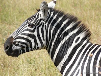 Reisen Afrika Kenia Masai Mara