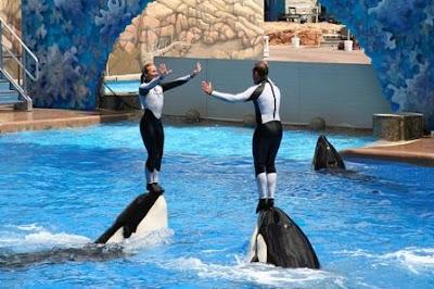 SeaWorld Florida, Orlando, FL