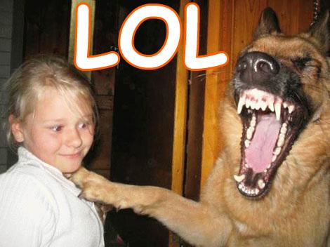 lol perro
