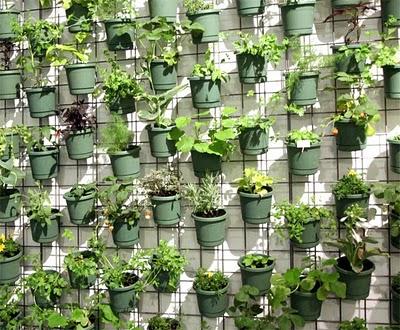 Decorar sustent vel muro verde jardim vertical e caldo verde for Tela para muro verde