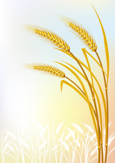606.03JB+ +Ancient+Wheat+Improves+Cardiovascular+Biomarkers Ancient Wheat Improves Heart Health