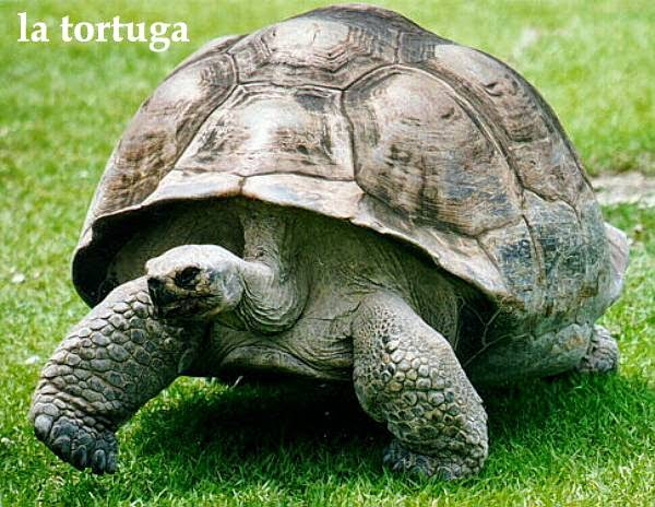 Turtle vs tortoise