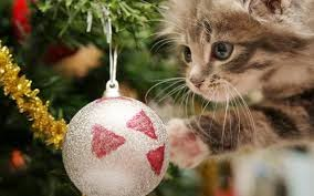 Funny HD Cat Christmas