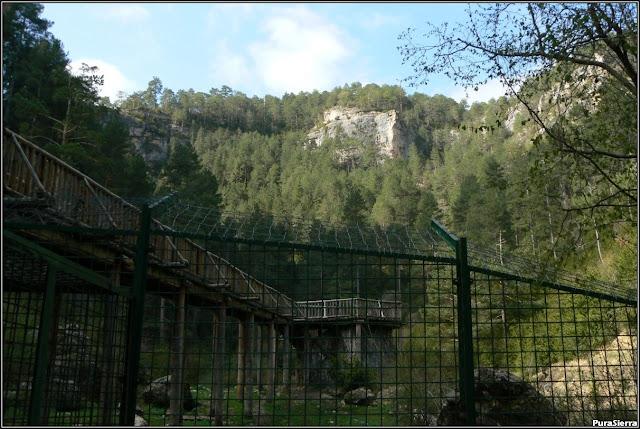 Vista desde abajo de la valla que separa la zona osera del Parque