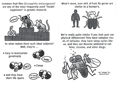 http://smallsciencecollective.tumblr.com/post/86334882599/fruit-flies-by-emily-fundis-small-science