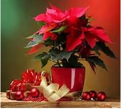 red flowers to decorate christmas