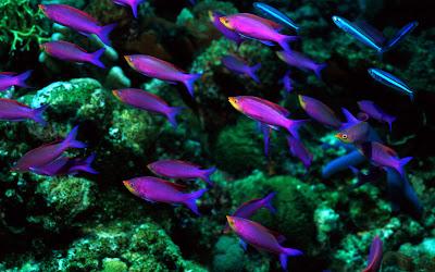 Underwater World Wallpapers
