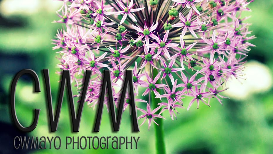 cw mayo photography