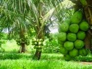 Arvores Frutíferas Mais Vendidas Clique na Foto