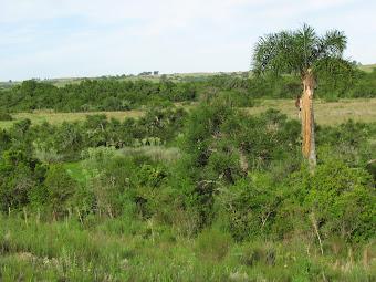 Bosque: algo más que un grupo de árboles