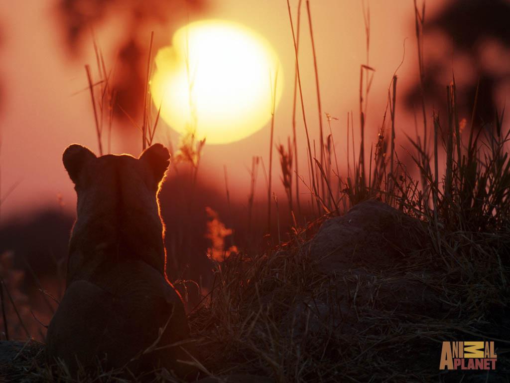 20 Beautiful animal pictures (20 pics) | Amazing Creatures