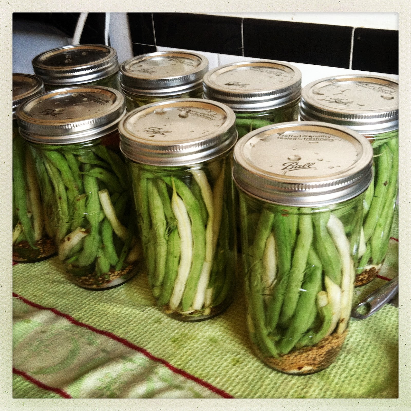 CanCan: Spicy Pickled Green Beans