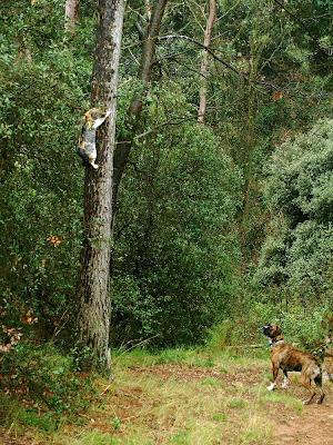Competència al Bosc de Can Deu