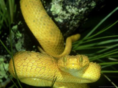 Venomous snakes and Snake Bite ~ planetanimalzone