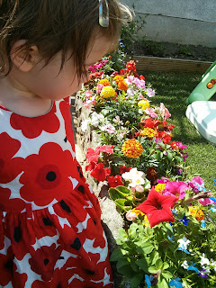 lots of pretty flowers