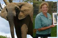 Gajah Tewaskan Pawangnya di Kebun Binatang Selandia Baru