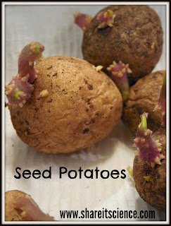 http://www.shareitscience.com/2015/05/glimpse-of-garden-week-7-seed-potatoes.html